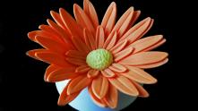 Project 8_3 - Flowers - Gerbera