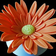 Project 8_3 - Flowers - Gerbera