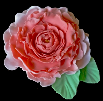 Project 9_1 - Flowers_Wild Rose